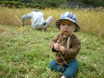 稲刈りメグル