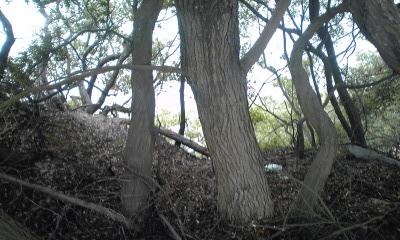 通仙園下は崖