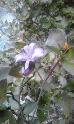 秋に咲いたつつじ