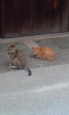 本島の猫1