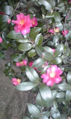 秋の花11