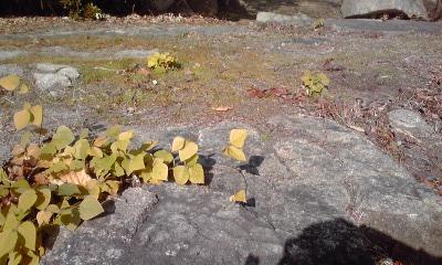 三の丸たたみ岩一部