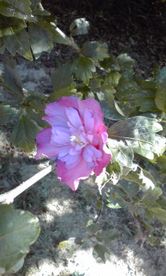 秋の花10・9