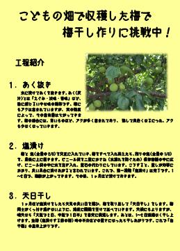 梅干し作り挑戦中0614