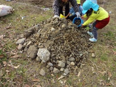畑の石拾い 130212 3