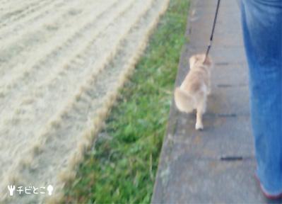 お散歩りっくん。。