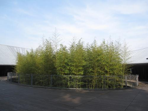 高知県立 牧野植物園-2