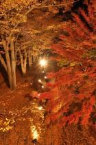 2010信州上田城けやき並木紅葉まつり001