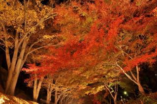 2010信州上田城けやき並木紅葉まつり002