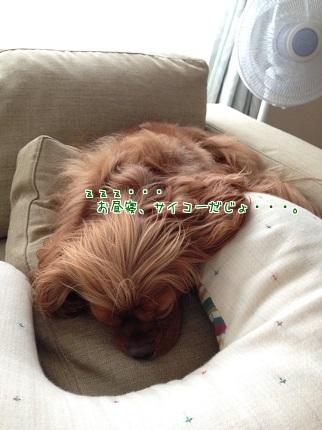 嵐丸 2014.9.18-1