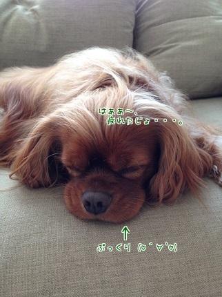 嵐丸 2014.9.23-6