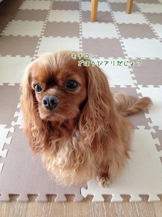 嵐丸 2014.9.23-5
