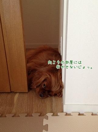 嵐丸 2014.9.24-5