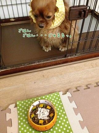 嵐丸 2014.9.28-5