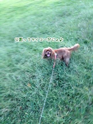 嵐丸 2014.9.28-2