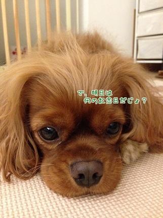 嵐丸 2014.9.28-11