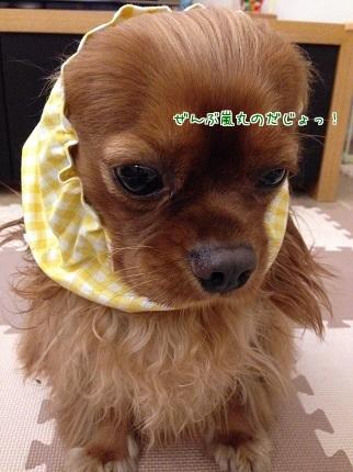 嵐丸 2014.9.28-9