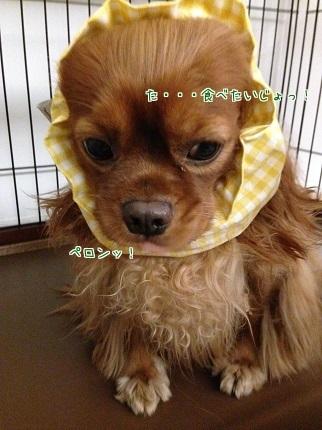 嵐丸 2014.9.28-6