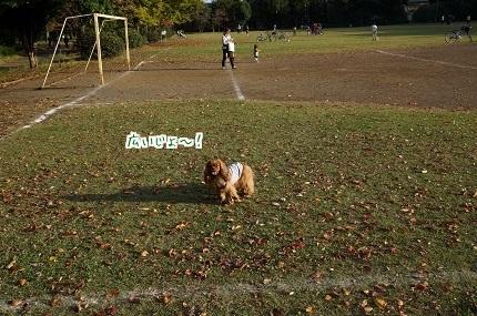 嵐丸 2014.11.9-6