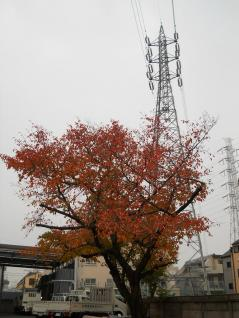 紅葉した木と12号