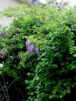 色々な観葉植樹