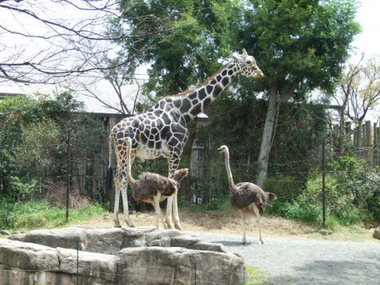 動物園のおみやげ