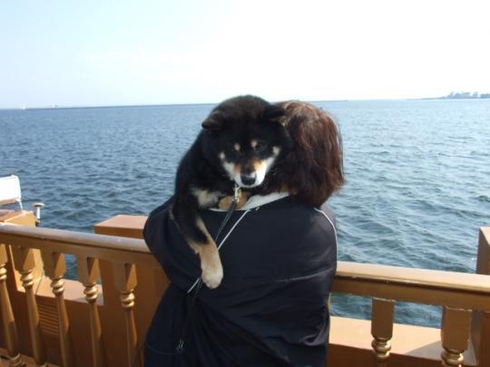 遊覧船に乗りました
