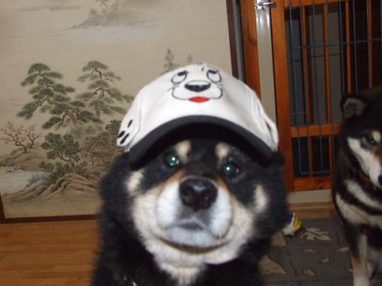 新しい帽子