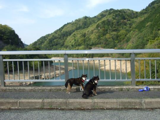 新緑の滝畑ダム