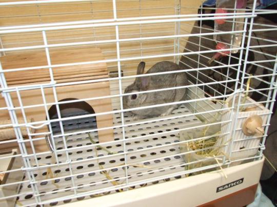 こんにちは~ウサギ