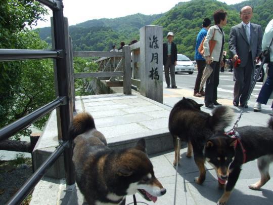 京都 嵐山