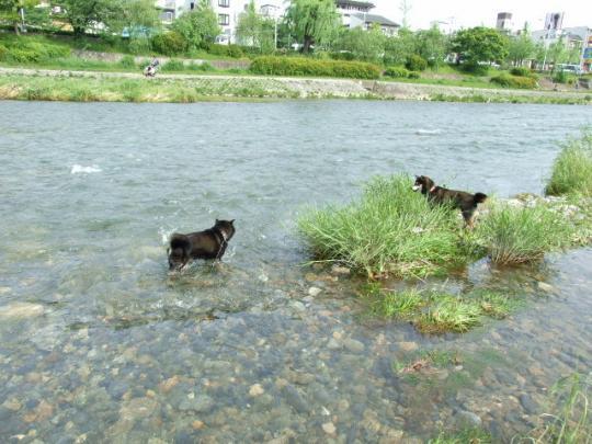 京都 鴨川遊び