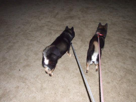 夜のお散歩は暑かった