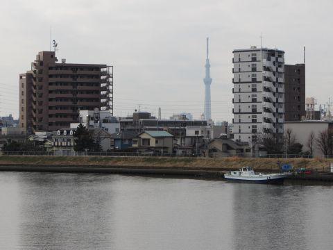 中川橋よりスカイツリーを望む