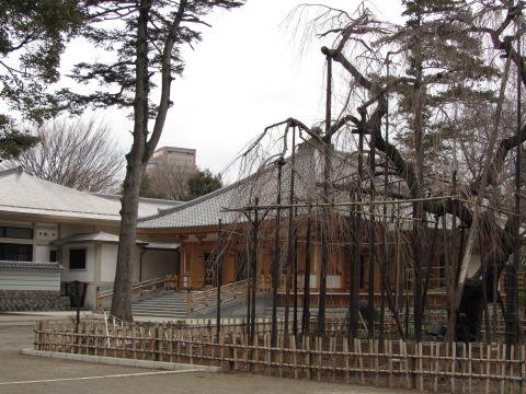 伏姫桜と祖師堂