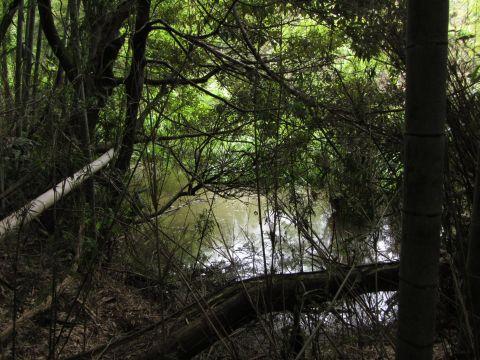 江原刑場跡下の池