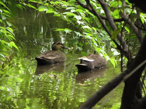 江原刑場跡下の池にて