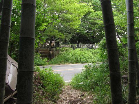 江原刑場付近のけもの道