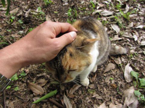 姥が池の猫