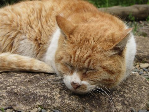 三逕亭の眠り猫