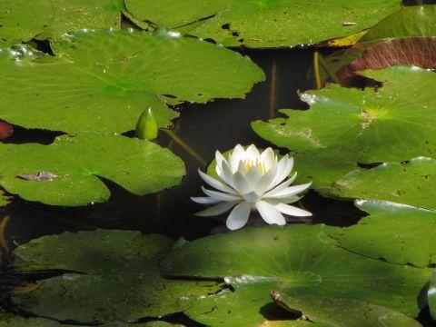 姥が池にて