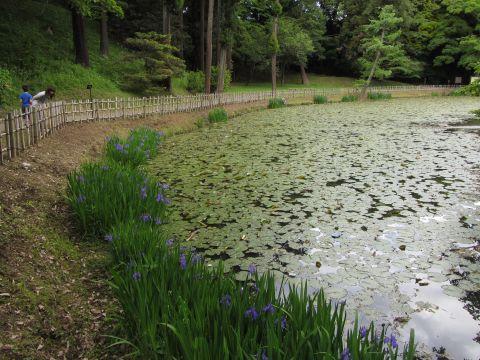 佐倉城址姥が池