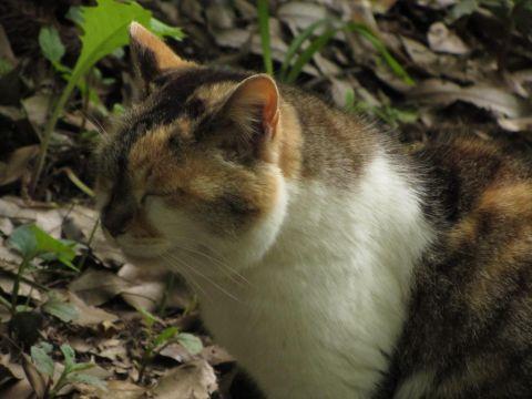 佐倉城址姥が池で出会った野良猫