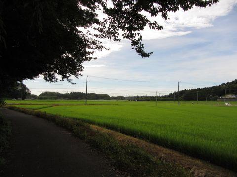 台方の谷津地に広がる田園