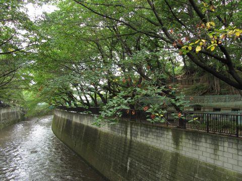 石神井川と加賀公園の築山