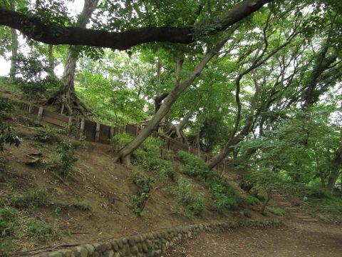加賀公園の築山