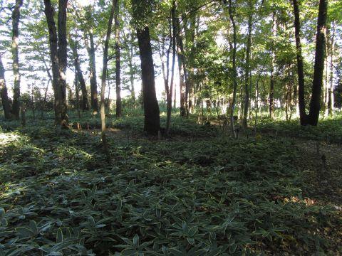 睡足軒の森