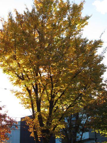 竹間沢の欅並木