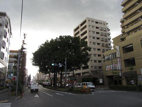 川越街道五本けやき