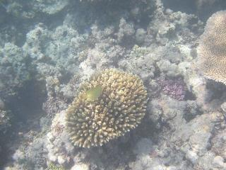 ここのサンゴ礁はきれいでした~